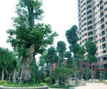 学府上城园林景观实景图